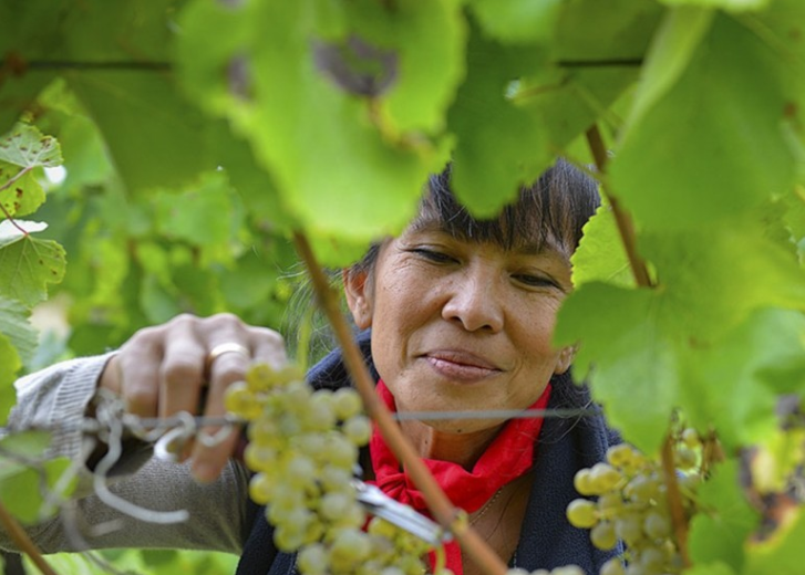 Chinese wine consumption growing in tandem with ageing millennials