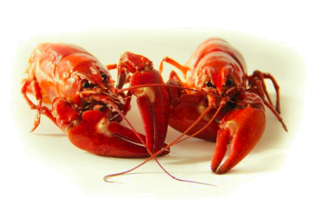 The Hard Choices To Make On Farmed Shrimp