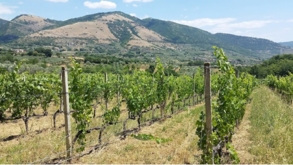 The Wines of Latium There is Potential Gold in Those Hills