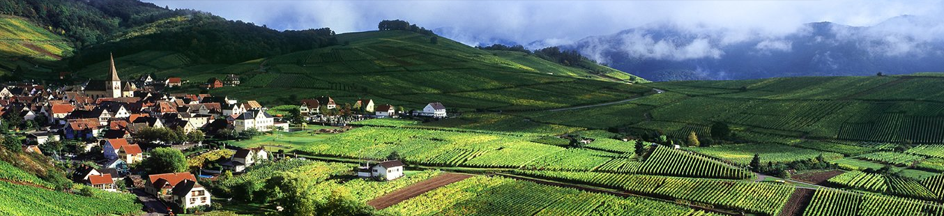 wine article Alsace
